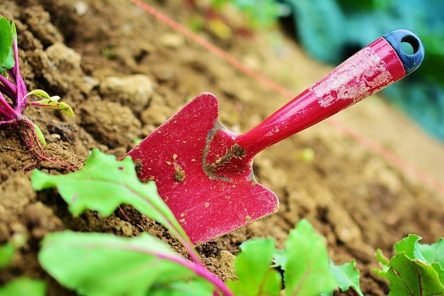 zahradnictví